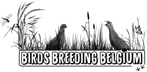 Birds Breeding Belgium